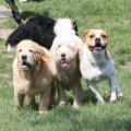 Countryside Boarding Grooming & Doggie Daycare - Image #19