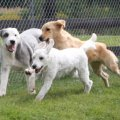 Countryside Boarding Grooming & Doggie Daycare - Image #3