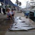 Miami Beach Deep Sea Fishing Charters