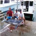 Miami Beach Sport Fishing