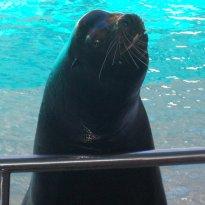 Here, we met the Sea Lion too@ the Aquatic show